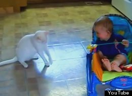 16 Babies Who Think Cats Are Hilarious