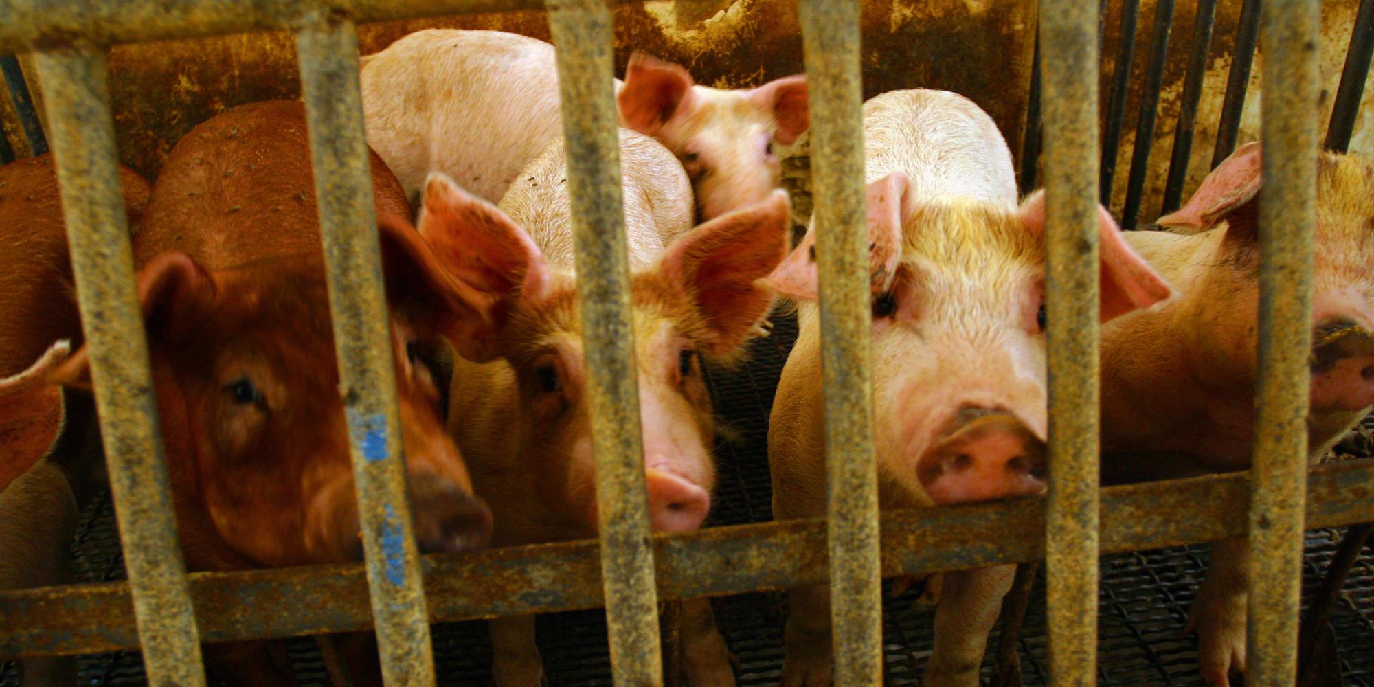 Tierwohl-Label stößt nicht nur auf Gegenliebe   Oliver Lippert