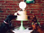 These Dogs Are Having A Fancier Wedding Than You