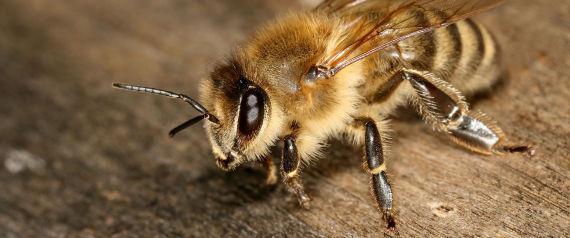 disparition des abeilles ces mets d licieux dont il faudra vous passer si cela arrive. Black Bedroom Furniture Sets. Home Design Ideas
