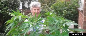 PATRICIA HEWITSON CANNABIS PLANT