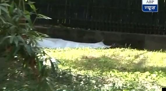 man killed by white tiger
