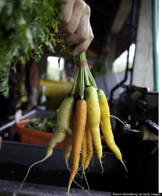 carrot squash