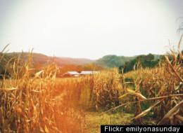 Weekend Road Trip: Autumn Harvest Fest In Wisconsin Dells