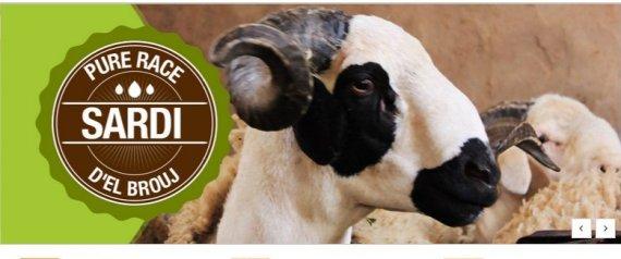 commander son mouton sur internet c 39 est d sormais possible au maroc. Black Bedroom Furniture Sets. Home Design Ideas