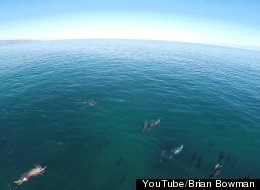 WATCH: The Best Part Of Waking Up? Dolphins In Your Yard