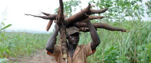 NIGERIA FARMING