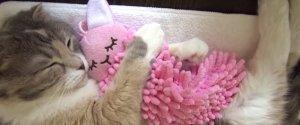 SNUGGLING CAT
