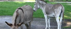 POLISH DONKEY SEX SCANDAL