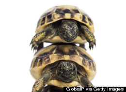 Man Found With 51 Turtles Beneath Clothing: Cops