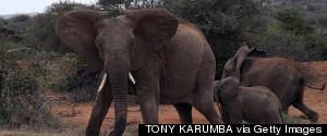 ELEPHANT POACHING