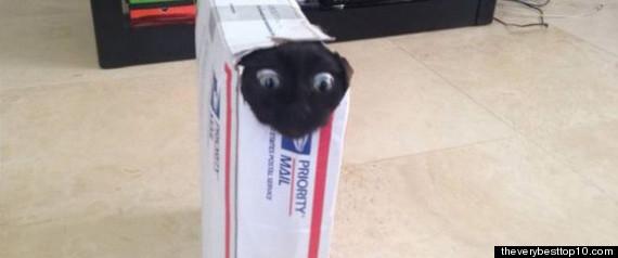 cat stuck priority mail box