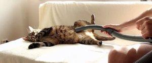 CAT VACUUM CLEANER