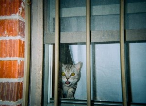 DISPOSABLE CAMERA CAT