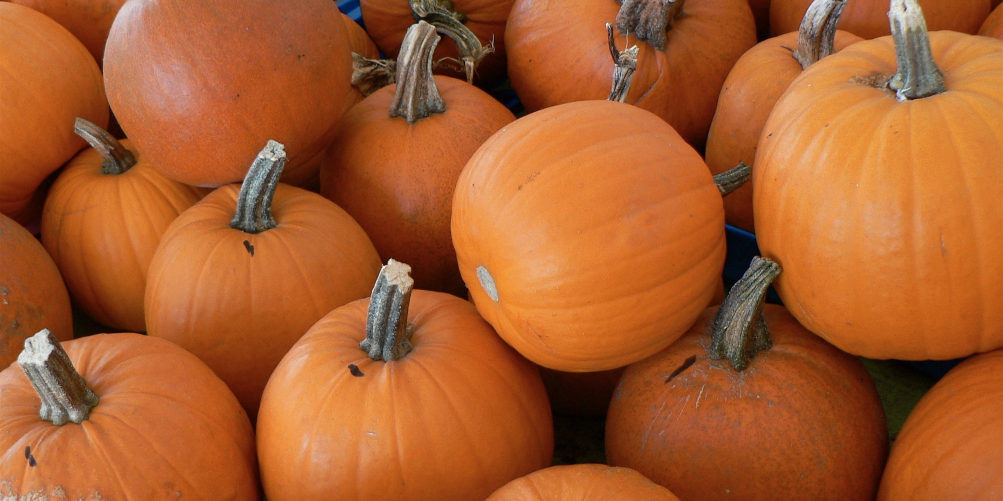 How To Cook With Fresh Pumpkin Huffpost