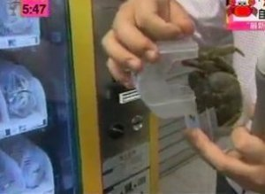 Live Crab Vending Machine China