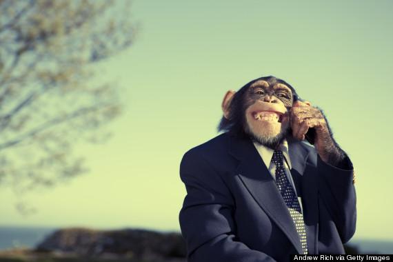 monkey in suit