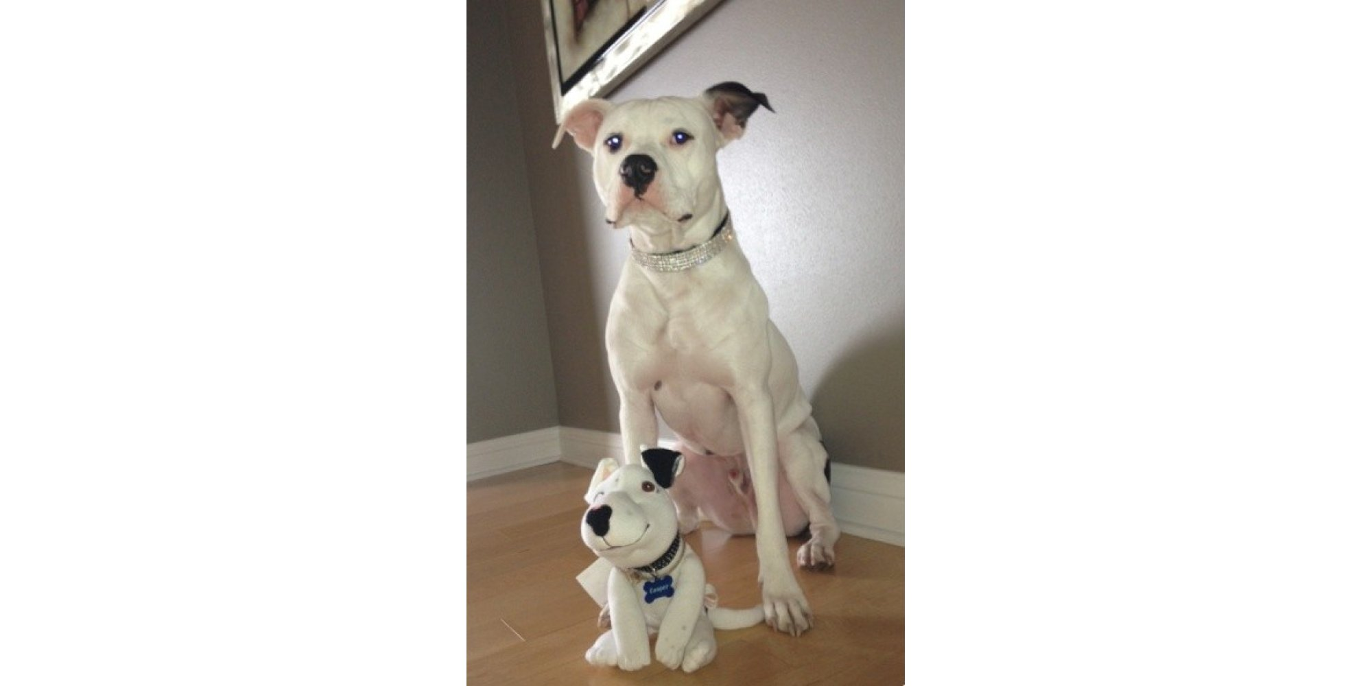 These Lovable Look Alike Creatures Of Your Pet Also Help