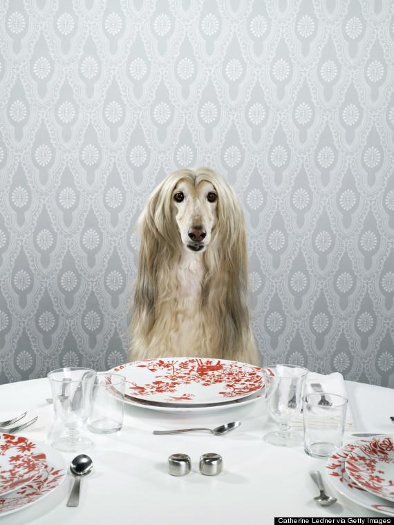 animal dinnertime