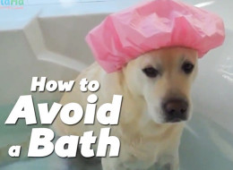 Kids And Pets Hate Baths, Try To Avoid Them By Being Adorable