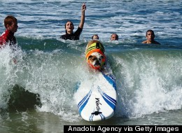 These Surfing Pooches Prove They're Capable Of So Much More Than Just The Doggie Paddle