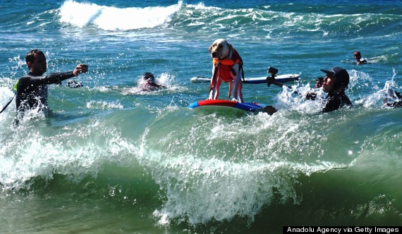 sixth annual surf city surf dog competition