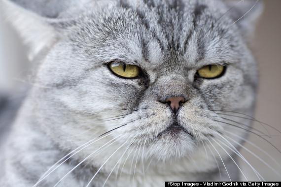 cats territorial