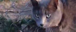 HONKING CAT
