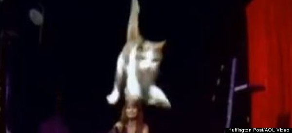 Watch The Cat Who Jumped Farther Than Any Cat Before