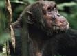 TRAGEDIA: LA MITAD DE LA VIDA ANIMAL YA HA DESAPARECIDO