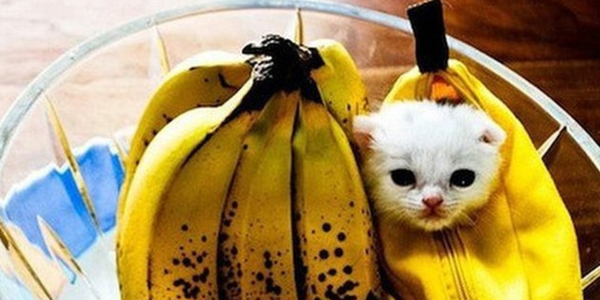 25 pet halloween costumes that are so cute we cant even huffpost - Halloween Costumes For Kittens Pets