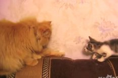 Cat and kitten | Pic: YouTube