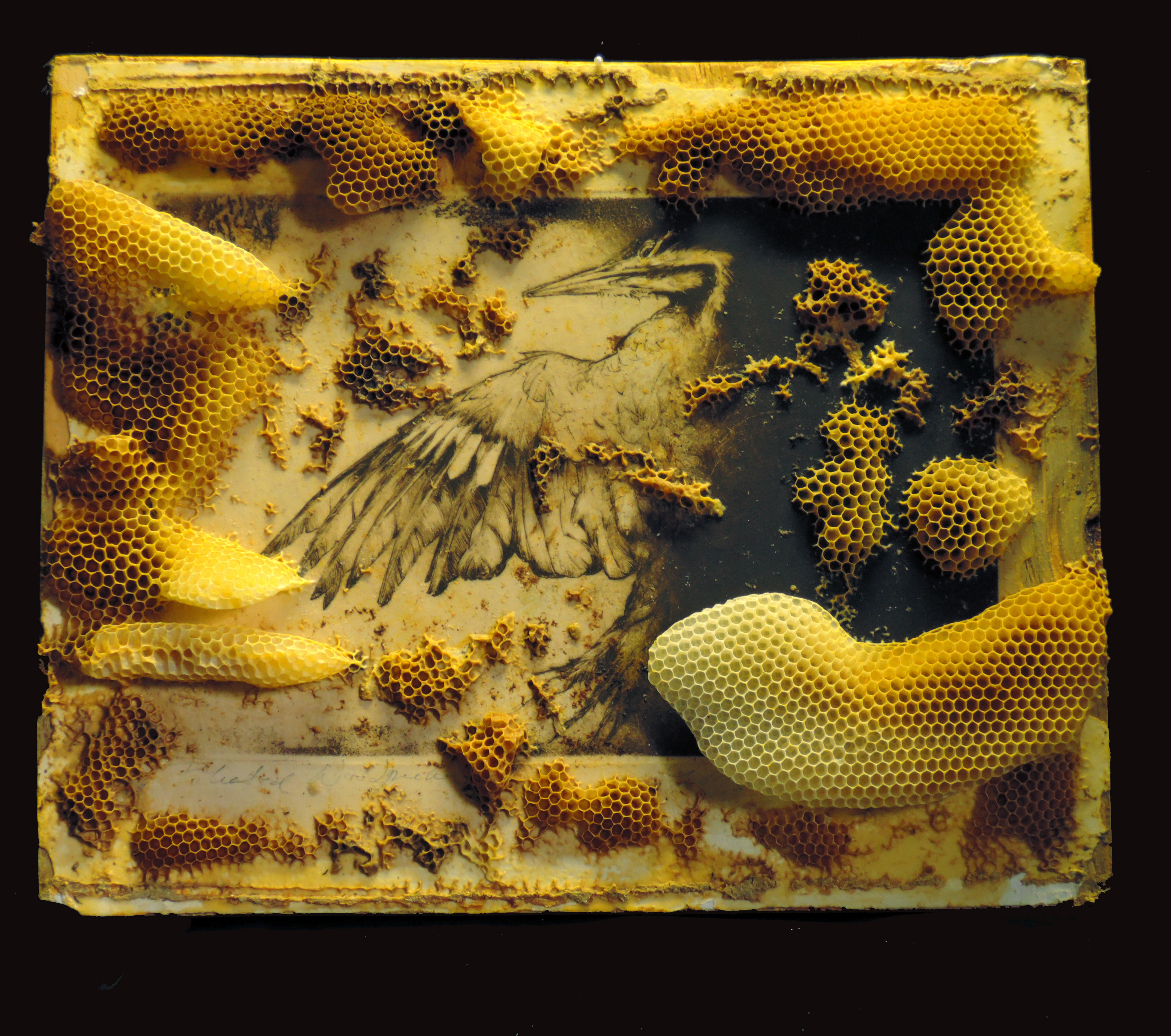 bees bird