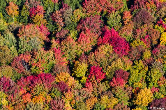 En ce début d'octobre, les couleurs chaudes de l'automne prennent