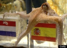Paul The Octopus Successor