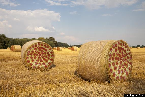 pizza farms