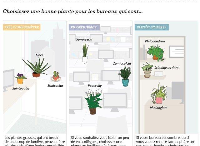 bien choisir une plante de bureau pour faire grimper en fl che sa productivit. Black Bedroom Furniture Sets. Home Design Ideas