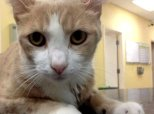 Kitty Gets Blood Transfusion From Pup. We Rethink Everything We Know About Cats And Dogs