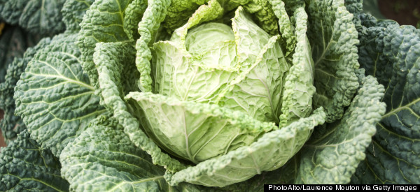 Cabbage Against Cancer!