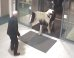 Horse Casually Saunters Into U.K. Police Station, Shows Himself Out
