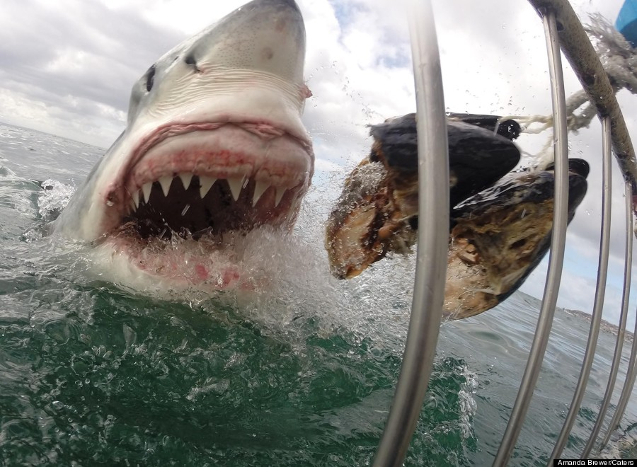 Great white shark gopro photo is the most terrifying nature picture
