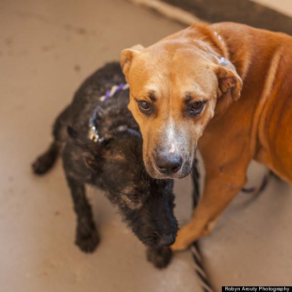 pup rescue