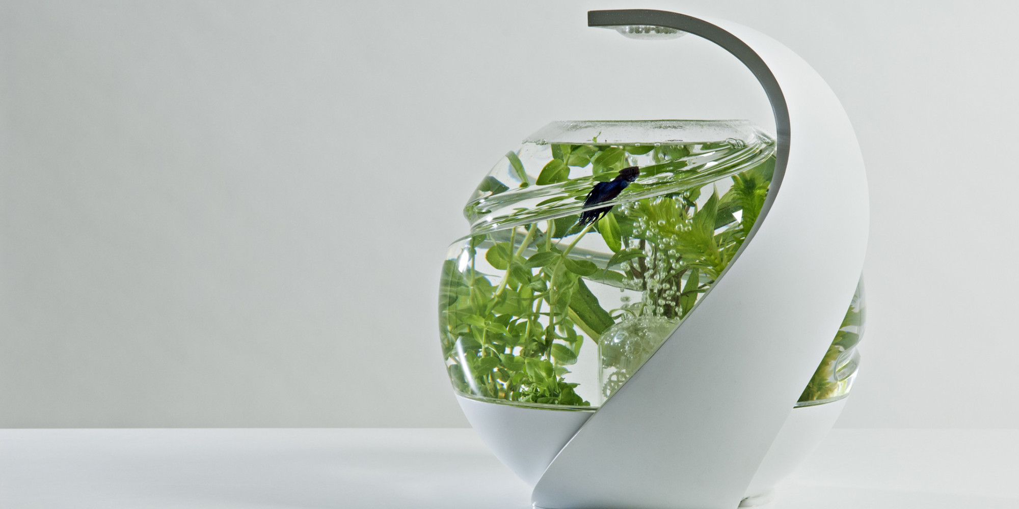 Finally the self cleaning fish tank now exists huffpost uk for Clean fish tank