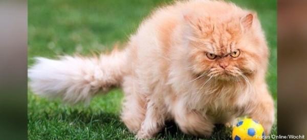 Was für ein böser Blick! Das ist die fieseste Katze aller Zeiten