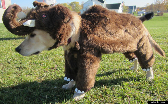 mammoth dog