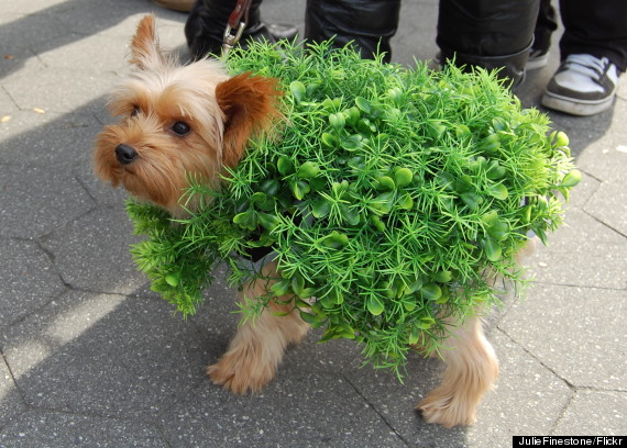 dog chia pet