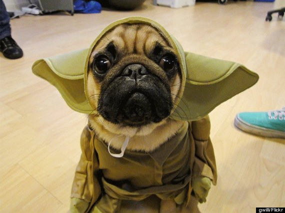 Great Dog Halloween Costumes