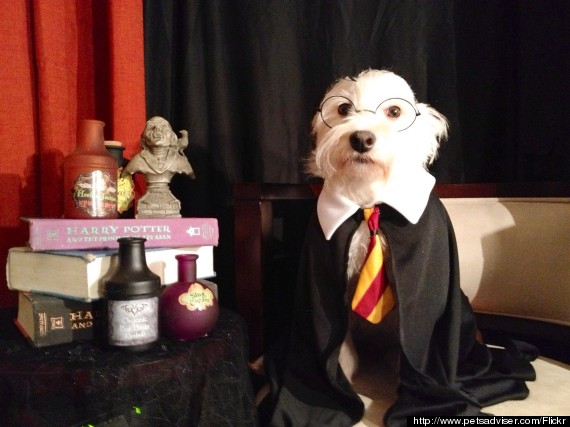 harry potter dog