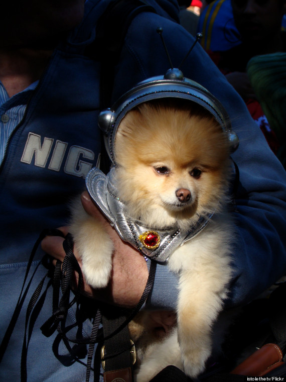 dog in space apollo - photo #15