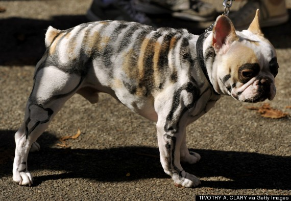 Dog Halloween Costumes For Sale